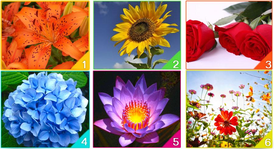 ¿Cuál es la flor que representa tu espíritu? 🌺