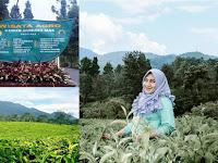 Agrowisata Gunung Mas Cisarua Bogor Suguhkan Suasana Khas Perkebunan Teh