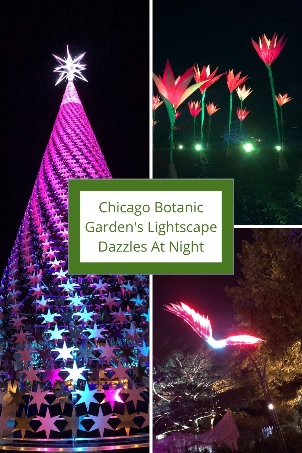 A Little Time And A Keyboard Dazzled By Nature Inspired Holiday Lights At Chicago Botanic Garden S Lightscape