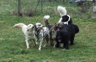 eduquer chien annecy thones faverges albertville