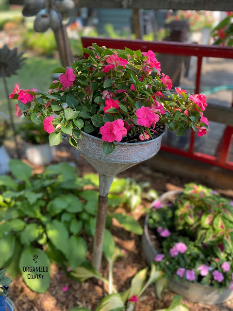 Photo of rose colored impatiens planted in a funnel.
