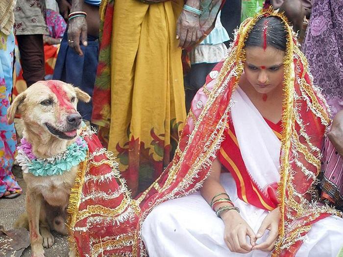 Casamento de animais (Índia)