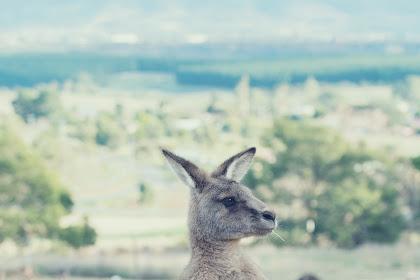 عالم الحيوانات واسرع الحيوانات علي وجه الارض