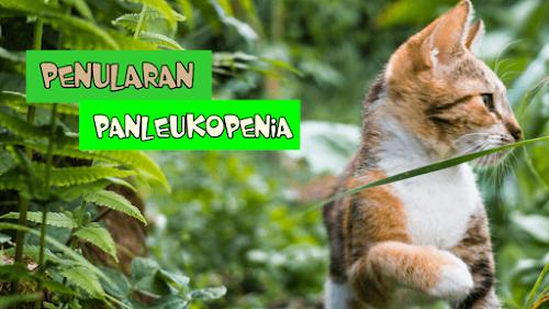 Jurnal Panleukopenia Kucing