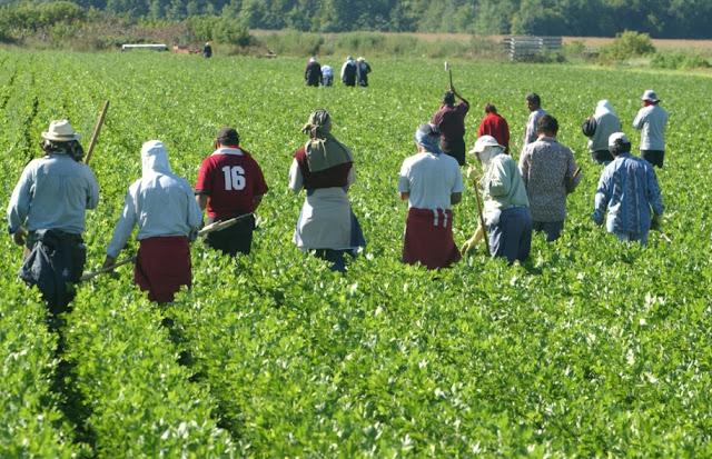 Οι ελλείψεις εποχικών αλλοδαπών εργατών γης ανησυχούν παραγωγούς και εξαγωγείς