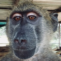 Alltag mit Affen