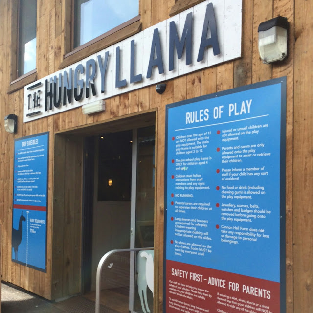 The hungry Llama at Cannon hall farm