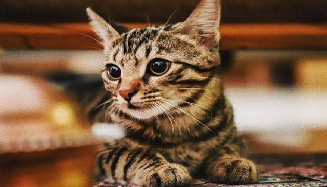 Membawa Kucing Ketika Shalat, Apakah Shalat Kita Sah?