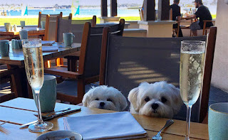 restaurantes petfriendly