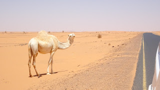 There are 3 million camels in Sudan