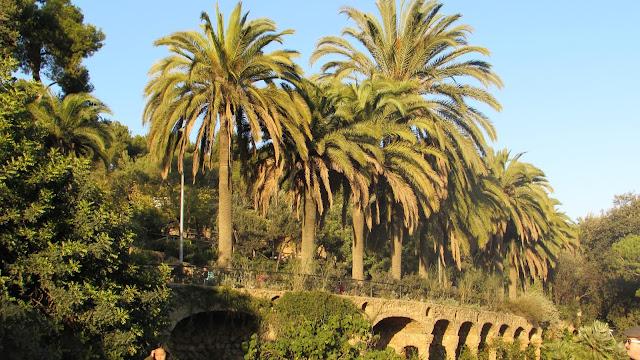 palmy Barcelona