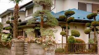 A rare Tokyo garden
