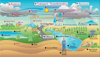 प्रदूषण का पौधों और जंतुओं पर प्रभाव
