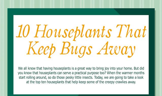 10 Houseplants that Keep Bugs Away