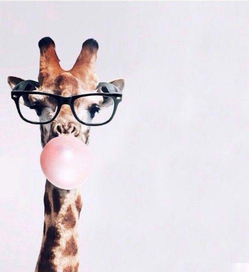 fondos de pantalla para descargar con imágenes de animales tiernos