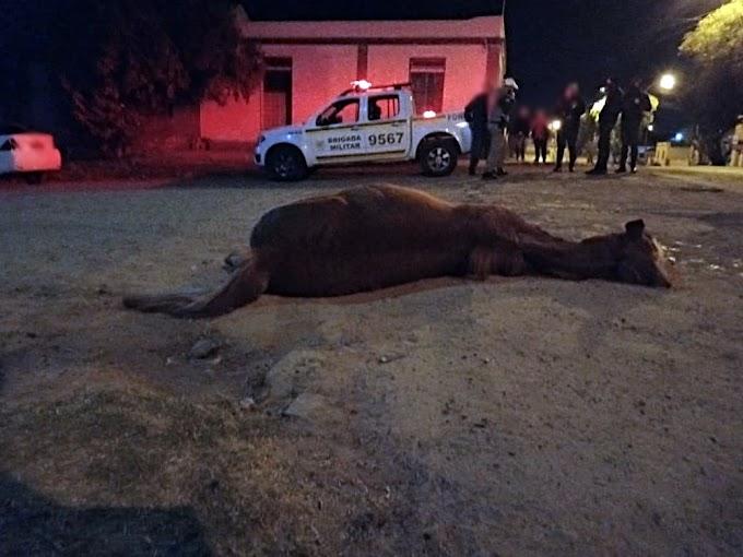 Cavalo causa acidente na rua Júlio de Castilhos