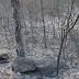 El fuego ha calcinado en España 26.000 hectáreas en lo que va de año