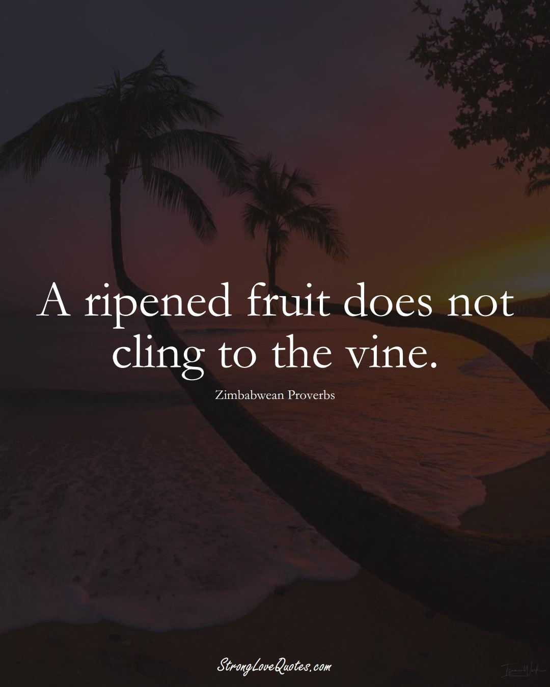 A ripened fruit does not cling to the vine. (Zimbabwean Sayings);  #AfricanSayings