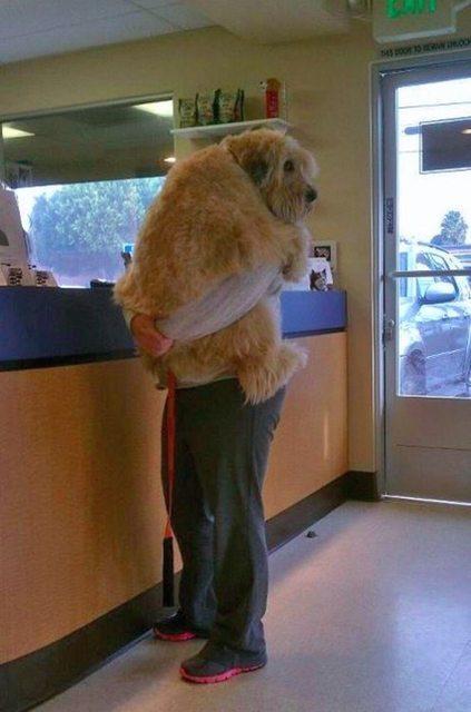 13 chú cún đáng thương cùng nỗi sợ mang tên bác sĩ thú y