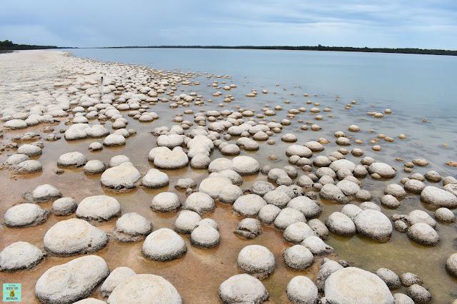 Trombolitos en el lago Clifton, Western Australia
