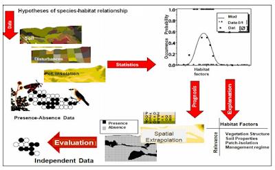 Habitat suitability modeling process