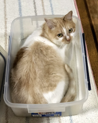 猫 in コンテナ