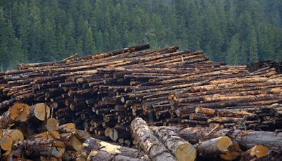 Negara Pengrusak Hutan Paling Parah di Dunia
