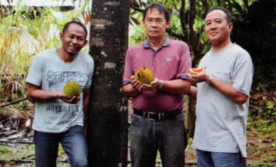 buah graviolens