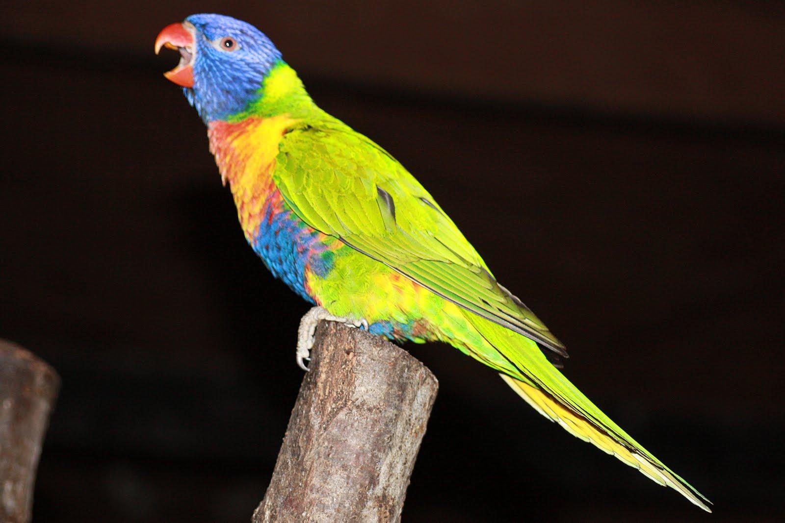 Trans Pond: colorful birds