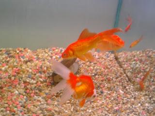 Funny Fish Tank Image