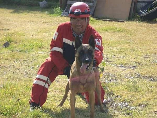 Balto, el perro rescatista de Oaxaca da su apoyo a la CDMX