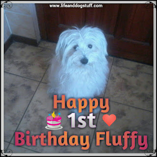 Happy first birthday Fluffy.