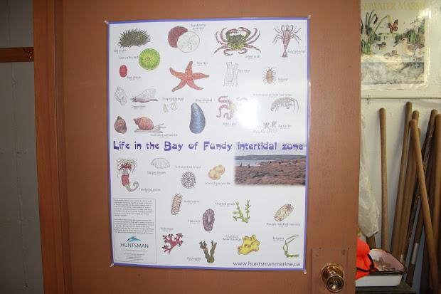 Huntsman Marine Science Centre Biology Posters
