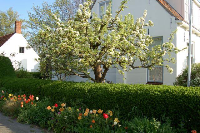 perenbloesem met tulpen
