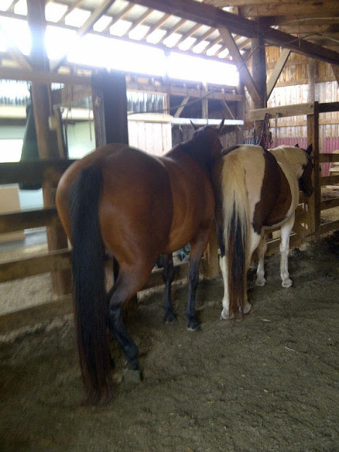 Clip-Clop Chronicles: Stories of a Girl and her Horse Adventures