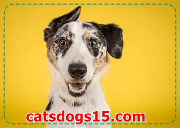 Lengthy-residing dog Breeds
