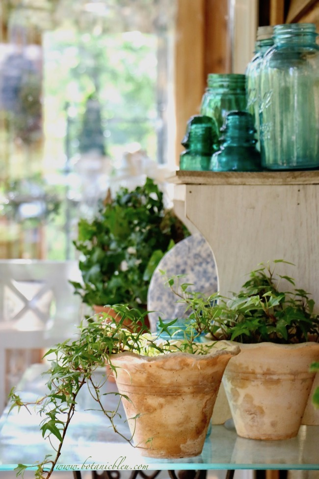 Potted ivy plants are hardy, easy to grow, and tolerate hot summers and shady porches