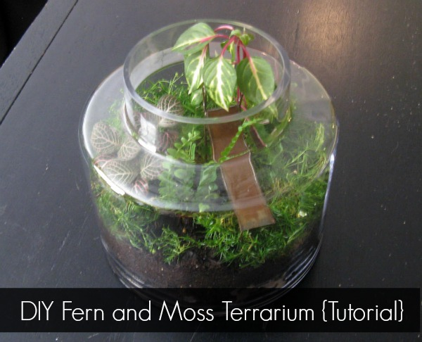 Get the Tutorial for this DIY Fern and Moss Terrarium at Sharon E. Hines