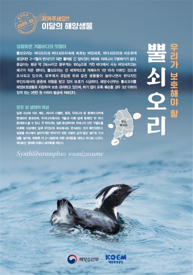 해수부, 2020년 1월의 해양생물 '뿔쇠오리' 선정