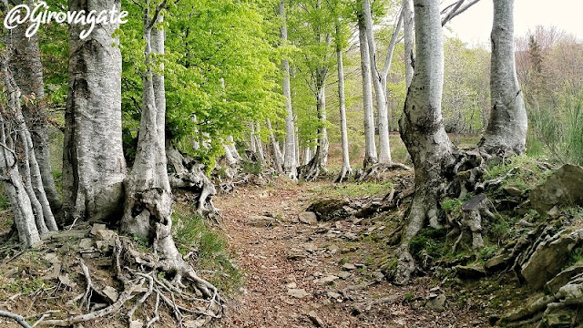 orsigna percorso trekking facile