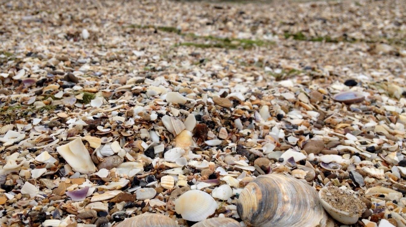 Plaża w Odessie Muszle
