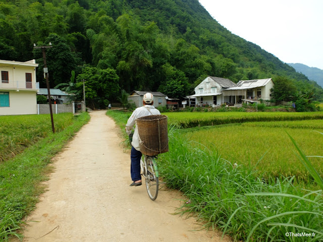 paysan recolte riz velo mai chau, vietnam voyage 15jours mai chau nord montagne riziere