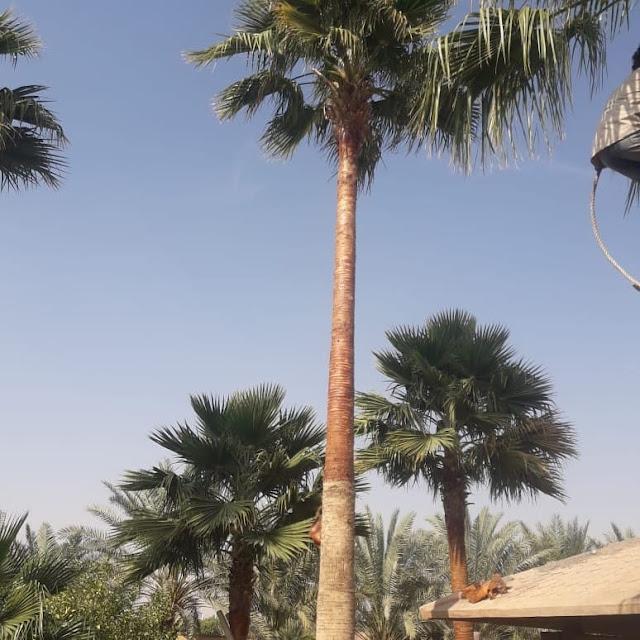 قص شجر حدائق في جدة