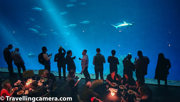 Since whole place was booked for an office event, we also had our dinner on these tables surrounded by huge water tanks with so many fish all around. Above photograph shows some of my colleagues enjoying their meal while watching sealife.      Above photograph shows Open Sea Wing. Monterey Bay Aquarium was claimed to be having the most jellyfish on exhibit in the world, which was reported by the San Francisco Chronicle.     Visitors look through a very large window into an aquarium containing a school of Pacific sardines and mahi-mahi. The million-gallon Open Sea community exhibit contains a school of Pacific sardines.