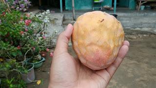 Nona fruit or Lady fruit