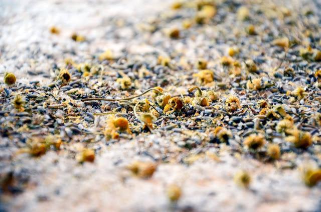 Non-Toxic Home Freshening with Lavender Carpet Freshener
