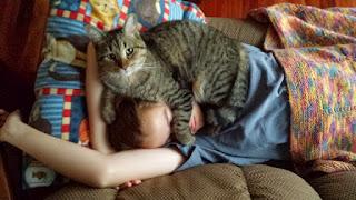 ¿Qué significa que tu gato duerma sobre ti?