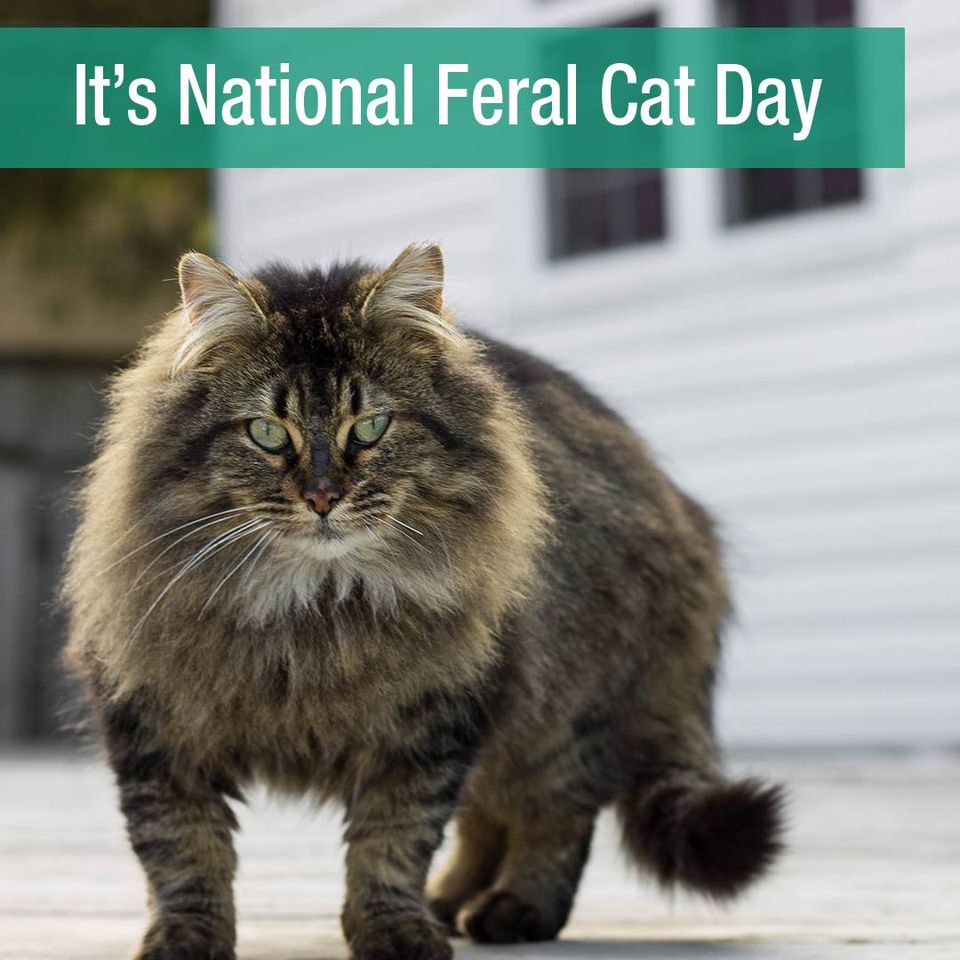 National Feral Cat Day Wishes Sweet Images