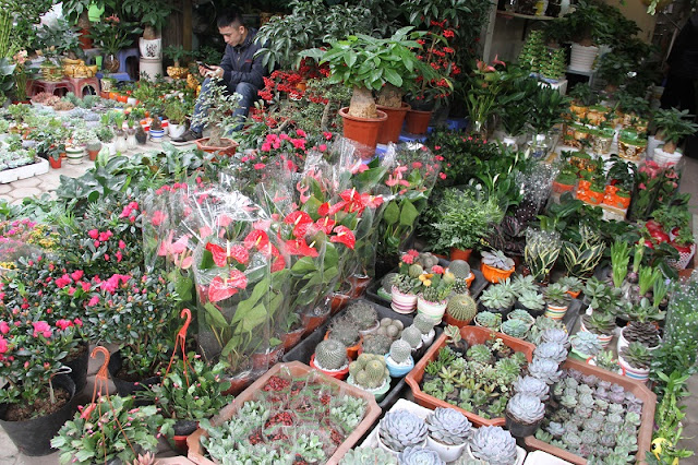 Six famous Tet flower markets in Hanoi 6