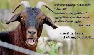 adhatoda_goat in Bin Laden's legacy